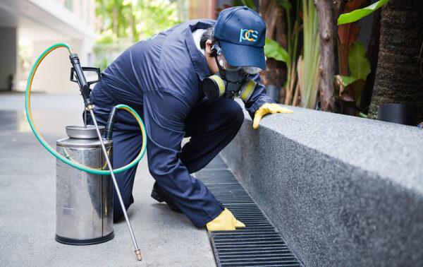 pest control in Sydney